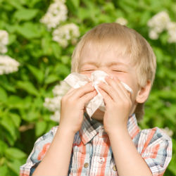 Most allergies are to natural substances, not cleaning products